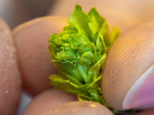 Der Hopfenschmecker - Über Biergenuss und mehr ... war zu Gast bei der Gesellschaft für Hopfenforschung e.V.