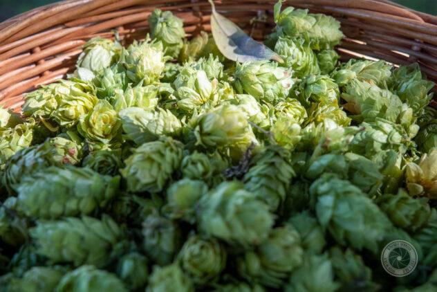 Der Hopfenschmecker - Über Biergenuss und mehr ... ist der Gesellschaft für Hopfenforschung e.V. beigetreten