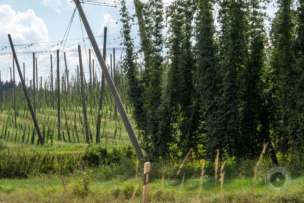 Der Hopfenschmecker - Über Biergenuss und mehr ... ist der Gesellschaft für Hopfenforschung e.V.beigetreten